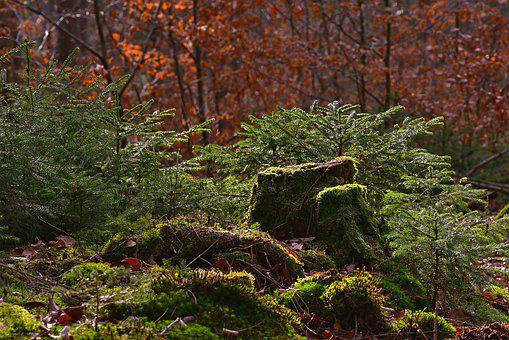 Forest, Nature, Tree Stump, Moss, Light