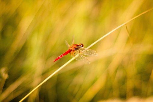 Grass, Spider Web, Nature, Macro