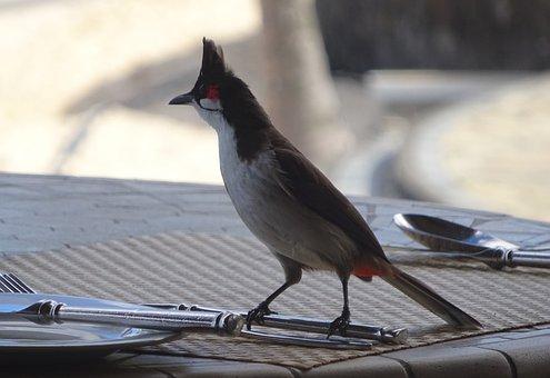 Bird, Table, Nature, Animal World, Cutlery, Mauritius