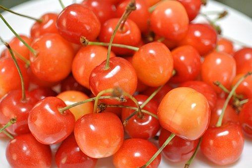Cherry, Orchard, Fruit, Harvest, Ripe, Nature, Fresh
