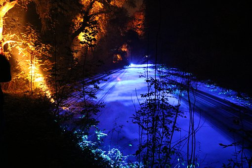 Light, Show, Forest, Background, Nature, Trees