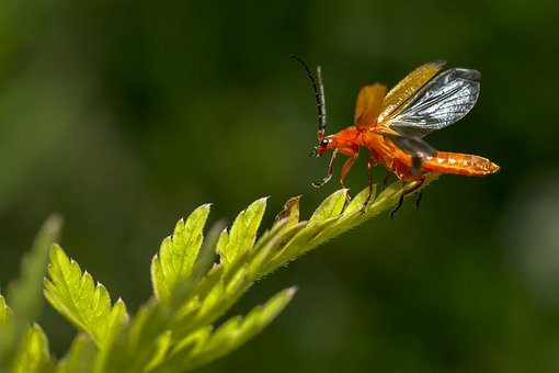 Red, Leaf, Macro, Portrait, World, Nature, Beetle, Fly