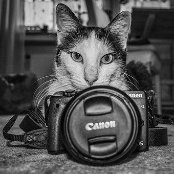 Easter Cat, Cat, Pet, Cute, Grey, Animal, Sweet, Feline