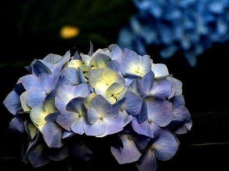 Natural, Plant, Flowers, Petal, Wood, Leaf, Blue
