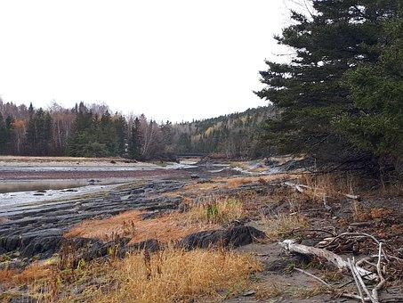 Nature, Wood, River, Forest, Autumn, Quebec, Travel