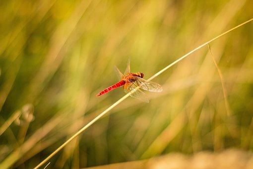 Grass, Spider Web, Nature, Macro, Morning, Green