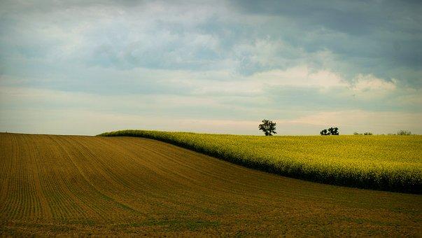 Landscape, Rape, Rape Land, Sky, Clouds, Spring