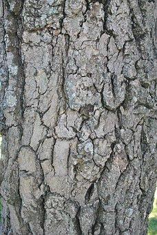Bark, Tree, Trunk