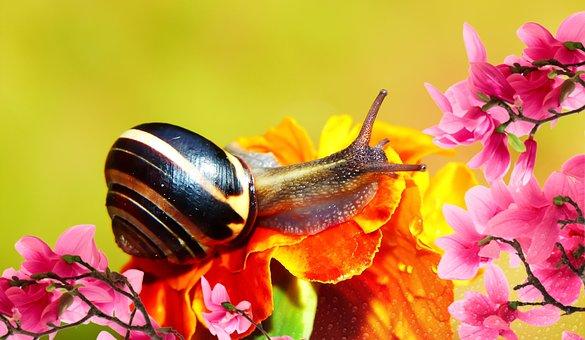Wstężyk Huntsman, Molluscum, Flower