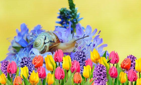 Zaroślarka Total, Snail, Flowers, Posts, The Petals