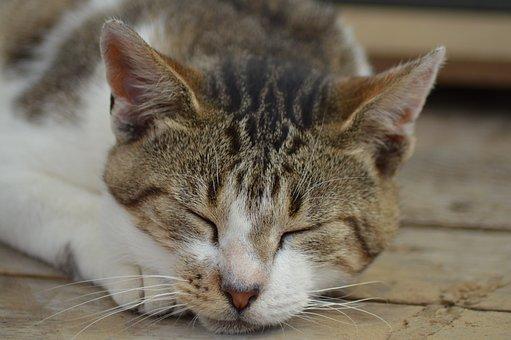 Animal, Cat, Asleep, Eyes, Closed, Whiskers, Ears, Legs