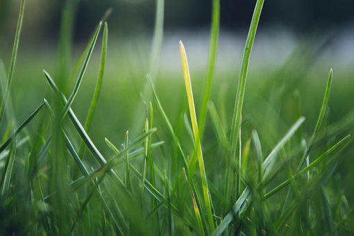 Grass, Background, Green, Fresh, Lawn