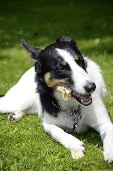 Dog, Chewing Bone, Dog Bone, Eats, Pet