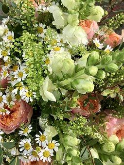 Flowers, Bouquet, Chamomile Blossoms, Loewenmaeulchen