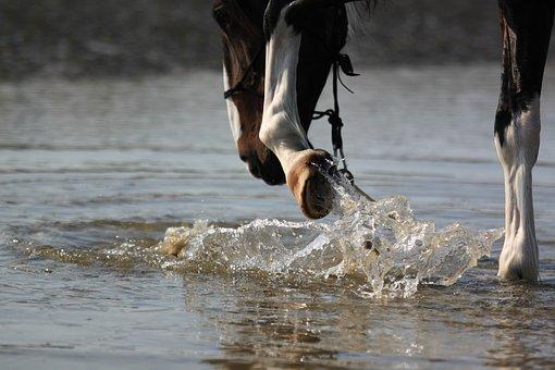 Horse, Hoof, Water, Sea, Splashing