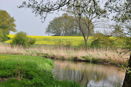 Spring, Bach, Nature, Water, Landscape, River, Green