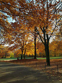 Trees, Autumn, Forest, Park