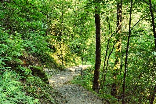 Path, Landscape, Haute-Savoie