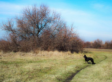 Landscape, Sheer, German Shepherd, Black Dog