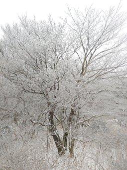 Winter, Jeju Island, Snow, Snow Flower