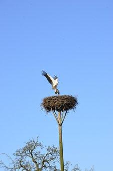 Stork, Nest, Breed, White Stork, Nest Building, Bird