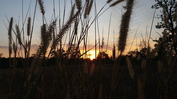 Sunset, Cool, Nature, Evening, The Sun, Mead, Sky