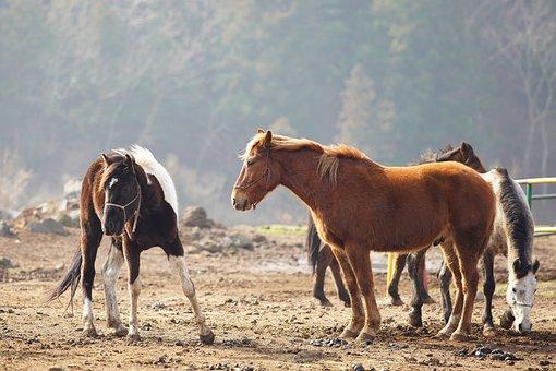 Horse, Ranch, Animal, The Farm, Livestock, Jeju Lsland