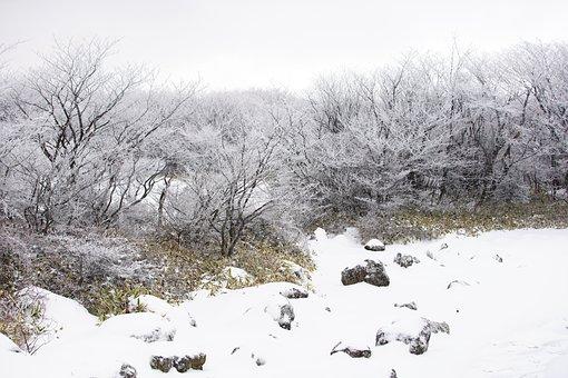 Snow, White, Winter, Tree, Nature