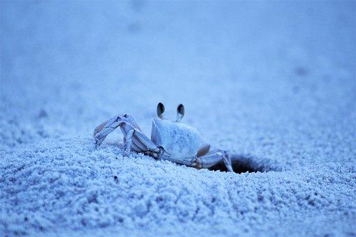 Underwater, Crab, Sea, Ocean, Fish, Marine, Nature