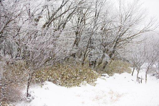 Snow, White, Winter, Tree, Nature, Landscape, Korea