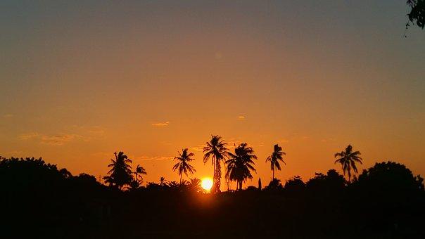 Sun, Sunset, Yellow, Tree, Coconut Tree, Sky, Orange