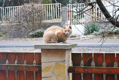 Kitten, Cat, Adventurer, Cute, Animal, Pet, Feline