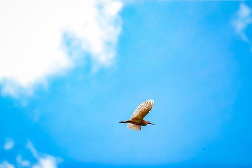 Nature, Bird, Big, Beach, Aves, Wings, Big-bird