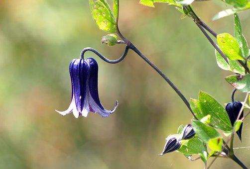 Natural, Plant, Flowers, Petal, Bud