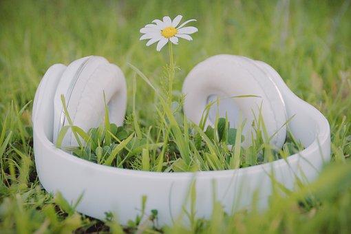 Rose, White Rose, Flower White, Daisies, Blossom