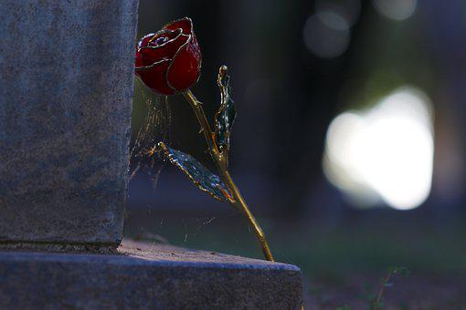 Love, Gold Rose, Cemetery, Grave, Dead, Dead Love