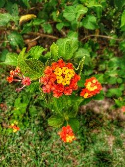 Flower, Earth, Earth Hour, Nature, Beauty, Green Earth