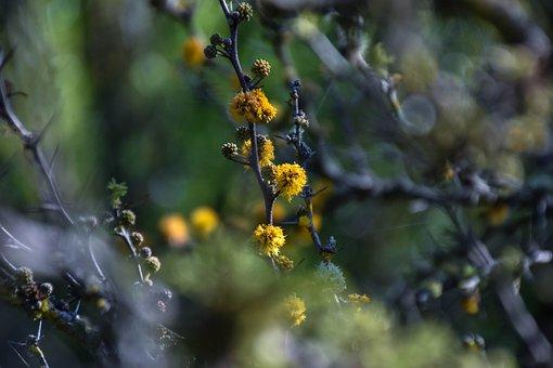 Flowers, Plants, Nature, Flora, Plant