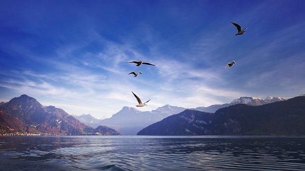 Gulls, Birds, Wing, Flying, Freedom