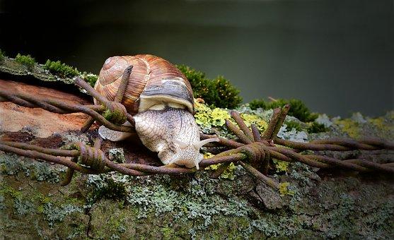 Snail, Helix Pomatia, Snails, Reptile
