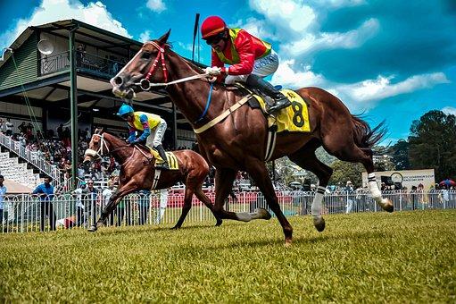 Horse, Equestrian, Race, Horse Race Track, Finish Line