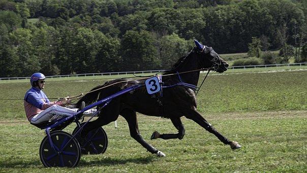 Horse, Race, Speed, Racing