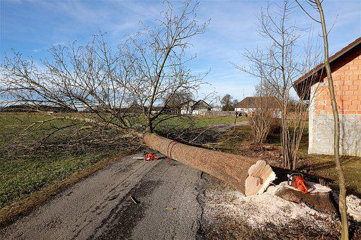 Tree, Dead Tree, Cases, Wood, Log, Tree Pruning