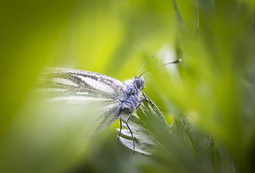 Summer, Butterfly, Macro, Portrait