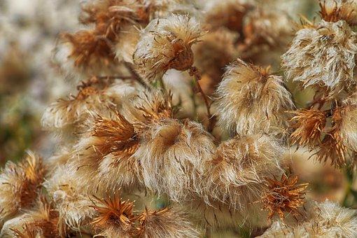 Flowers, Dead, Thistle, Winter, Ochre, Fall, Field