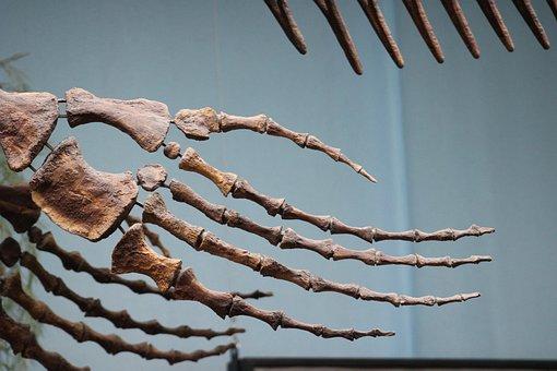 Dino, Dinosaur, Prehistoric Times, Reptile, Bone