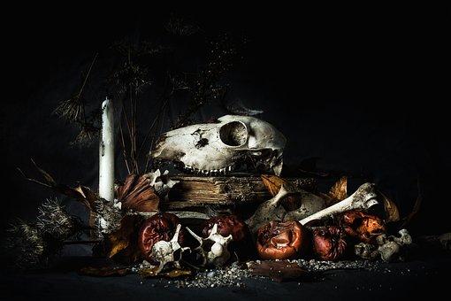 Skull, Skeleton, Bone