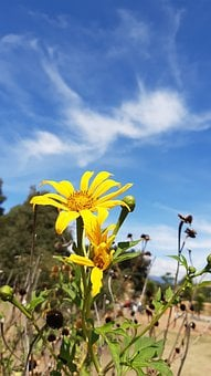 Flowers, Clouds, Sky, Plants, Colombia