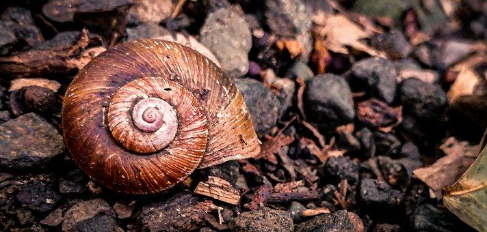 Snail, Shell, Snails, Molluscum, Spiral, Animals