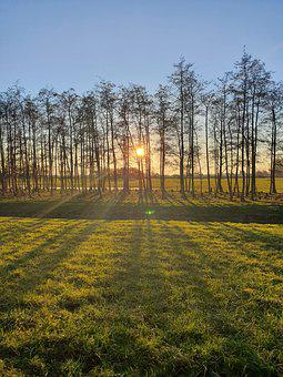 Earth Hour, Sunrise, Sunset, Trees